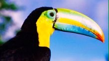 Spanish Panama Tours - Toucan