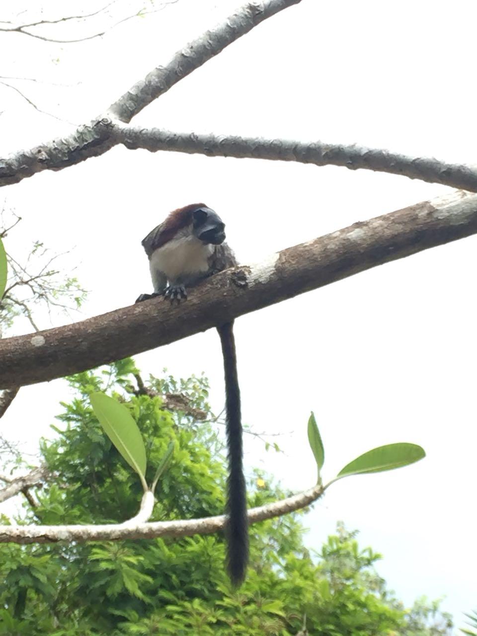 Gamboa Rainforest and Spanish Panama Activities; wild animals to see