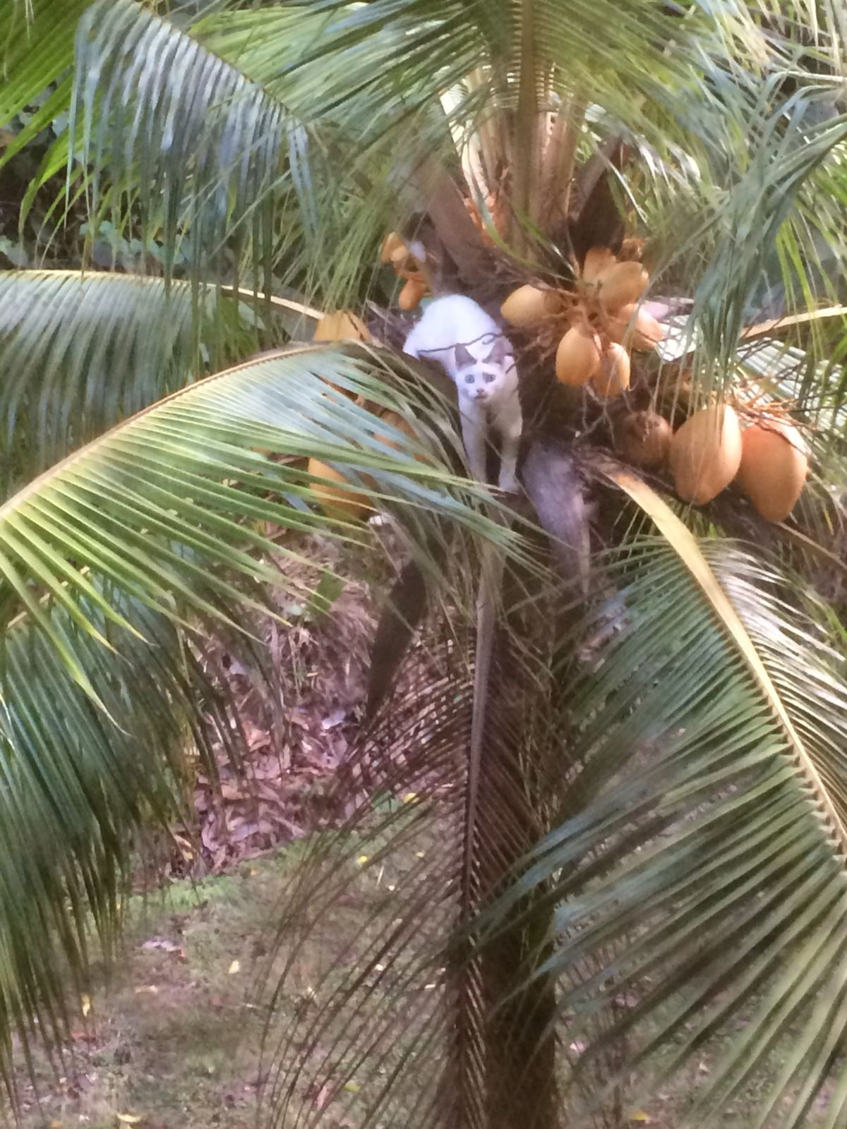Gamboa Rainforest and Spanish Panama Activities; and sometimes the animals are not so wild