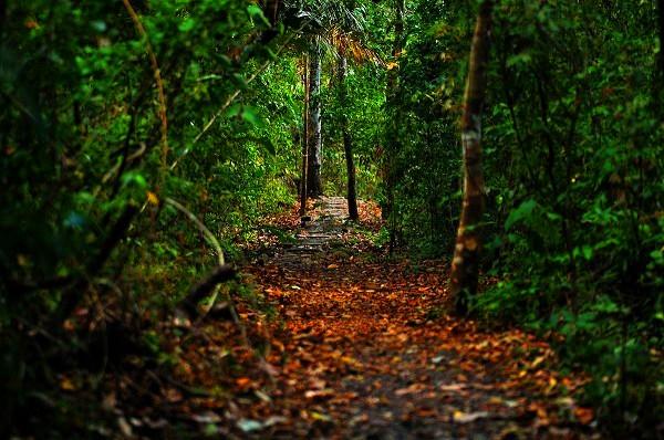 ParqueNaturalMetropolitano (1)