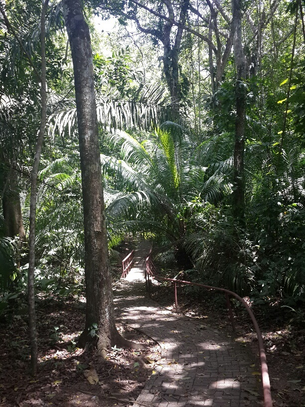 Gamboa Panama is surrounded by many nature trails and is a center for eco-tourism in Panama